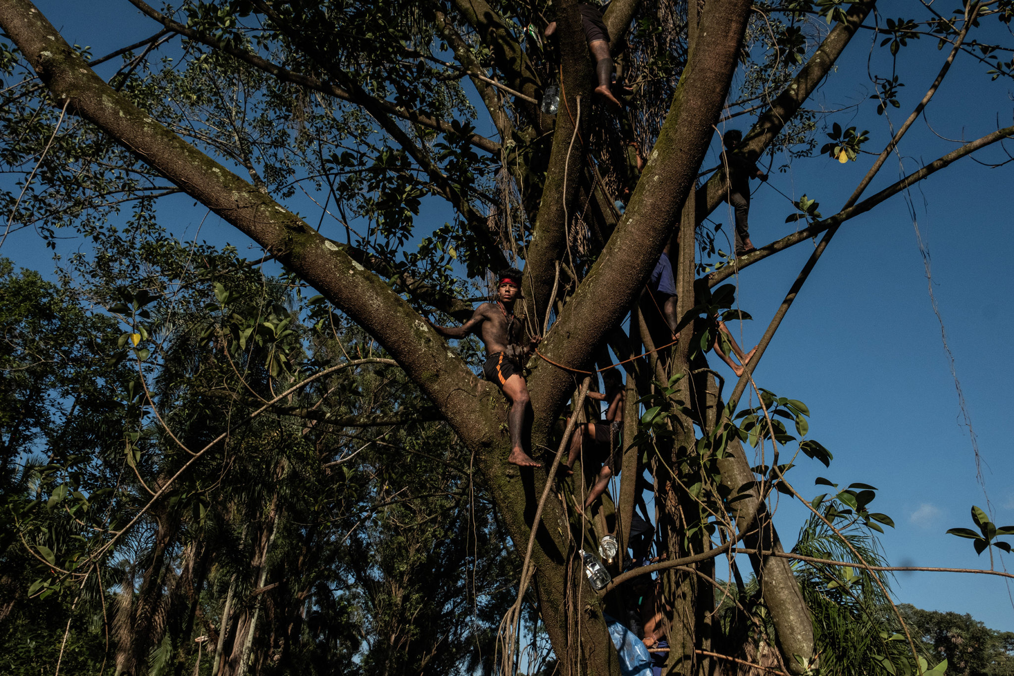 Guarani indigenous stand on top of a tree in alot in dispute with Tenda construction company in São Paulo.Image by Tommaso Prottifor Mongabay