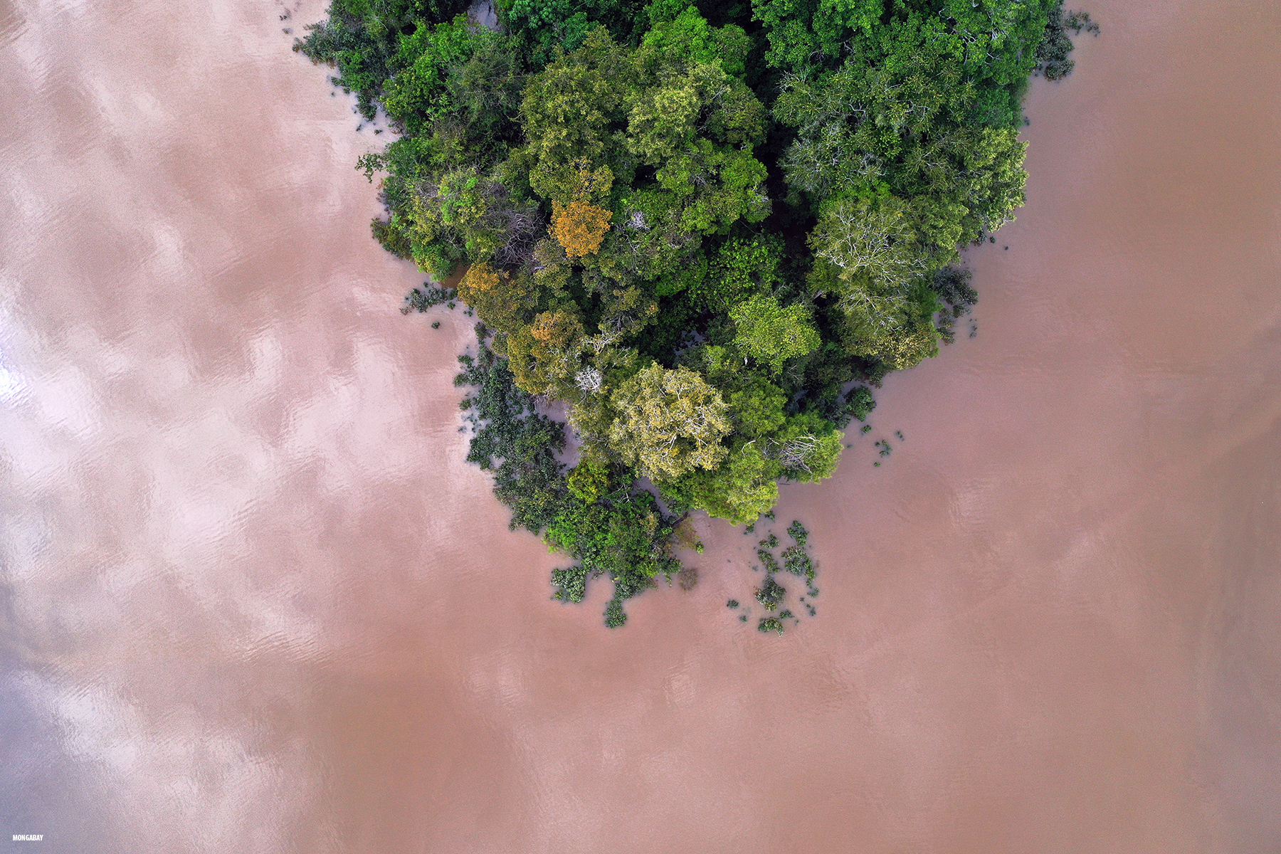 Flooded forest along the Zacambu River in the Peruvian Amazon. Photo by Rhett A. Butler for Mongabay.com
