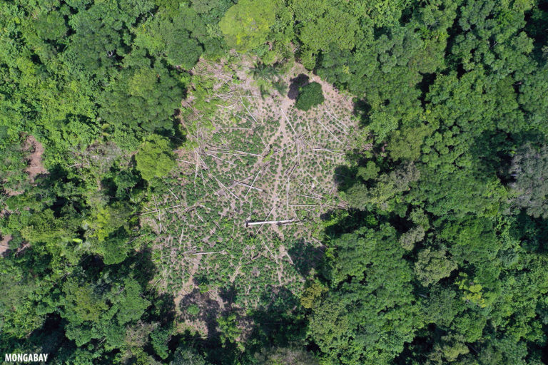 Forest cleared for coca in the Colombian Amazon. Photo by Rhett A. Butler for Mongabay.