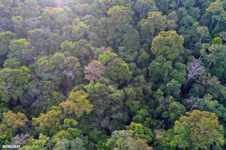 Rainforest in the Brazilian Amazon. Photo by Rhett A. Butler for Mongabay.