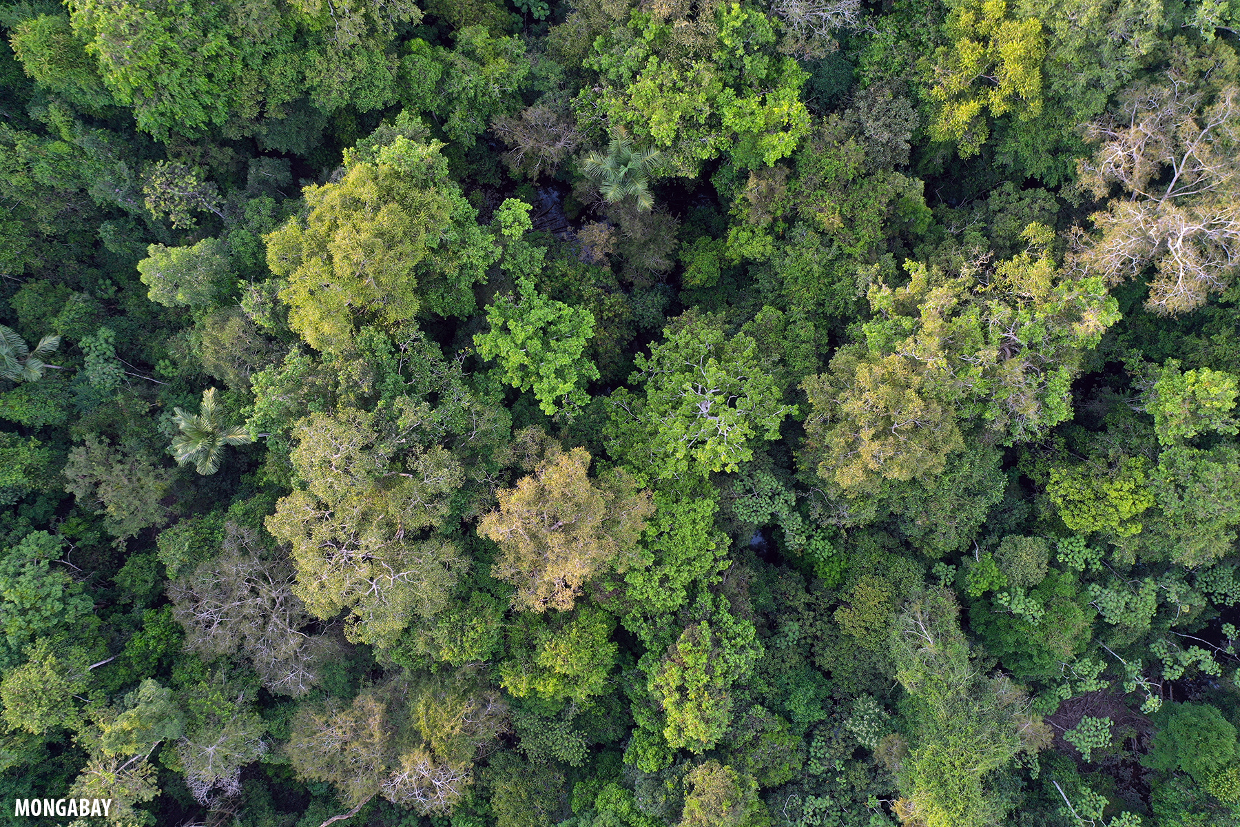 Amazon rainforest canopy in Brazil. Photo by Rhett A. Butler for Mongabay.
