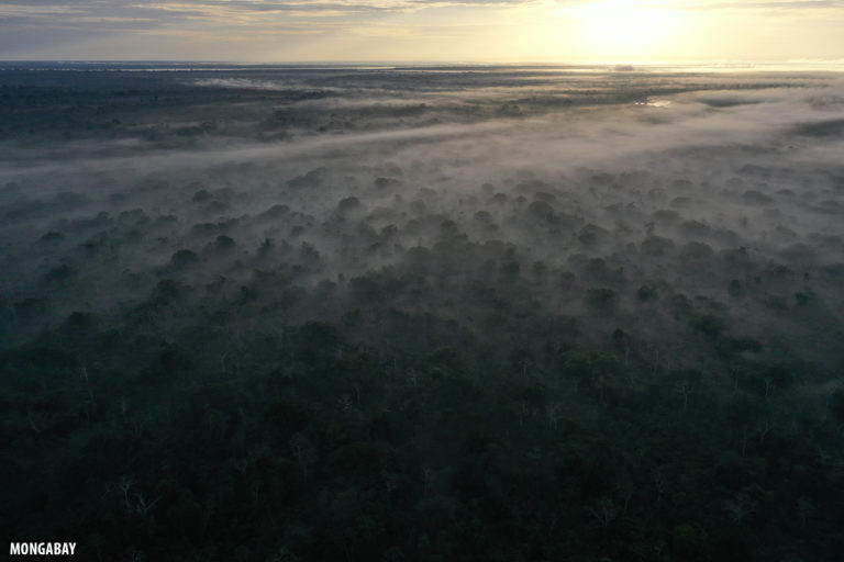 Mist rising from the Amazon rainforest at dawn. Photo by Rhett A. Butler for Mongabay.