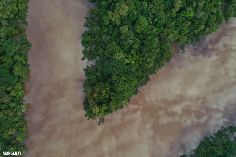 Drone view of flooded forest in the Amazon. Photo by Rhett A. Butler for Mongabay.