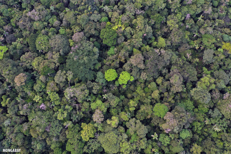 Overhead view of the Amazon rainforest canopy. Photo by Rhett A. Butler for Mongabay.