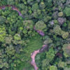 Rainforest creek in the Colombian Amazon. Photo by Rhett A. Butler for Mongabay.
