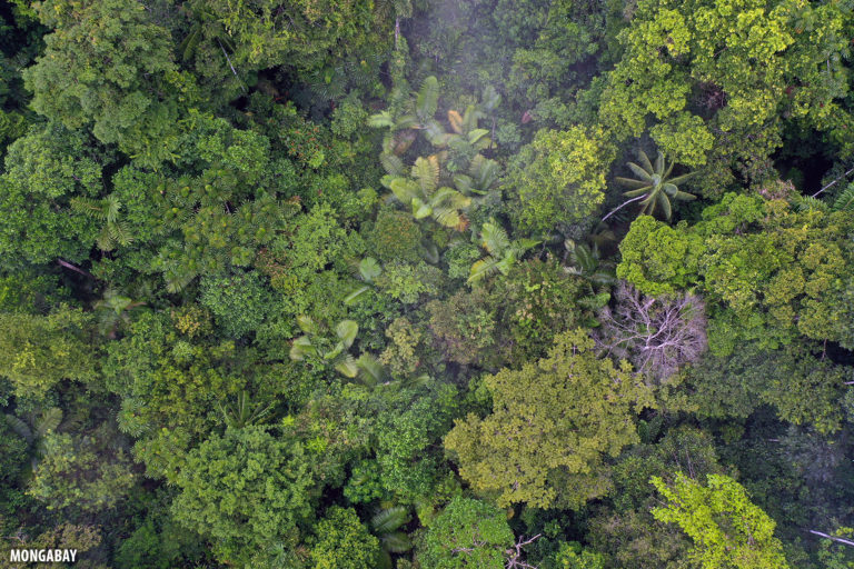 Aerial view of the Amazon rainforest canopy. Photo by Rhett A. Butler for Mongabay.