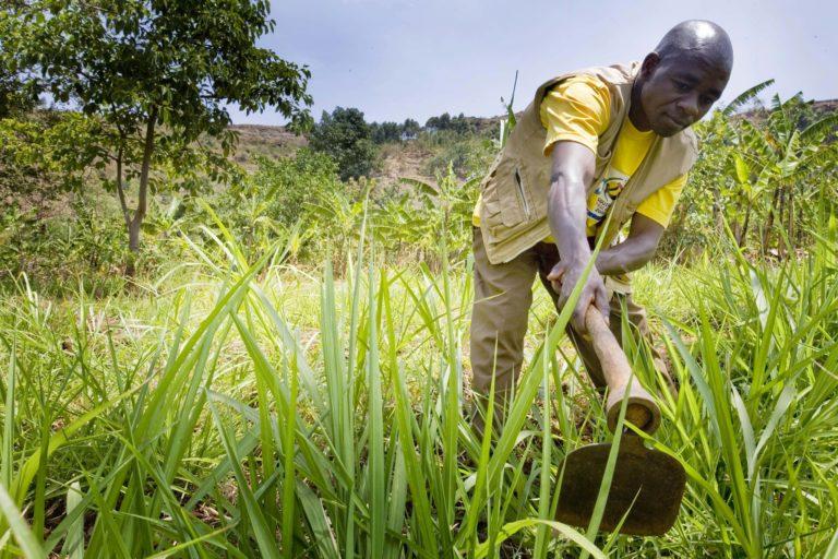 Farmer, Mount Elgon, Uganda. Image by Kate Holt/DFAT via Flickr (CC BY-2.0)