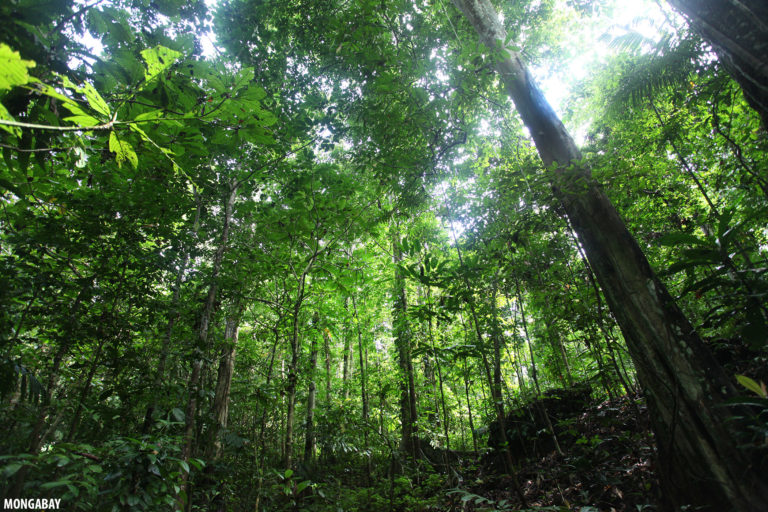 Lowland rainforest in West Papua. Along with neighboring Papua province, it holds more than a third of Indonesia's intact forests. Image by Rhett A. Butler/Mongabay.