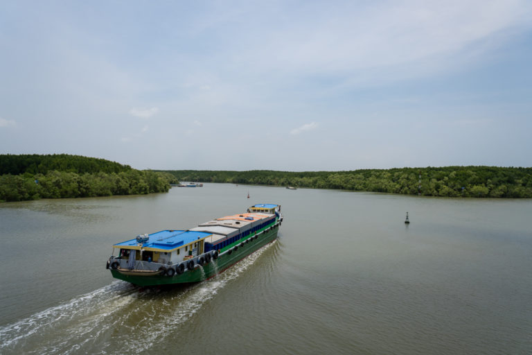 A vital mangrove forest hidden in Vietnam's largest city could be ...