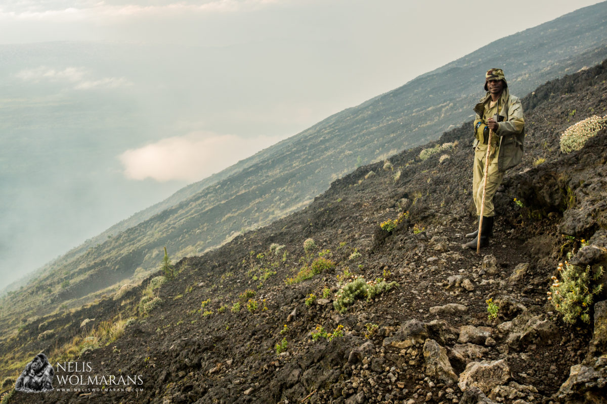 ICCN ranger in Virunga National Park, DRC. Image courtesy Nelis Wolmarans.