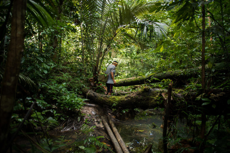 At the initiation of this project the Matsés rich knowledge of their lands and ancestral history resided only in the memory of their living elders. Photo: Mike van Kruchten / Xapiri