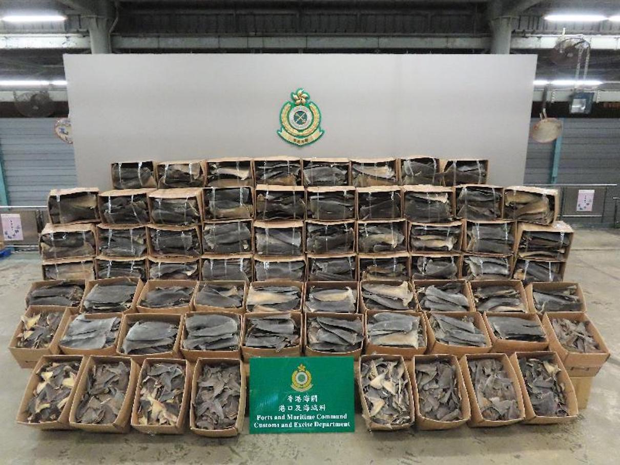 Authorities seize record 26 tons of illegal shark fins in Hong Kong