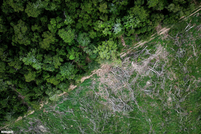 Deforestation for soy in the Amazon. Photo by Rhett A. Butler for Mongabay.