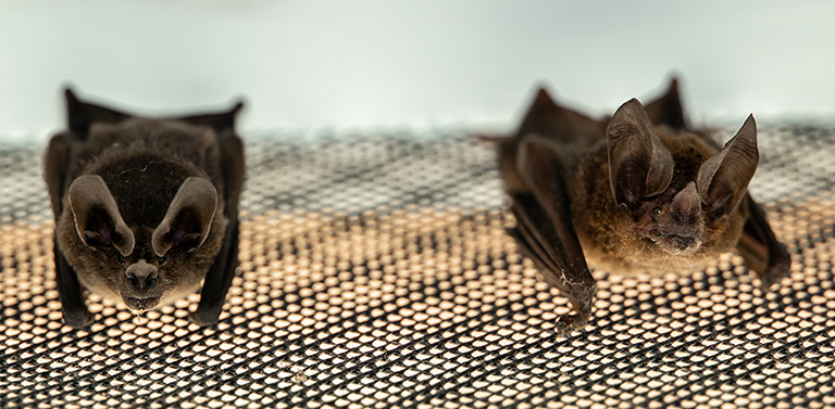 Bats on a screen. Photo by Andy Whitworth.