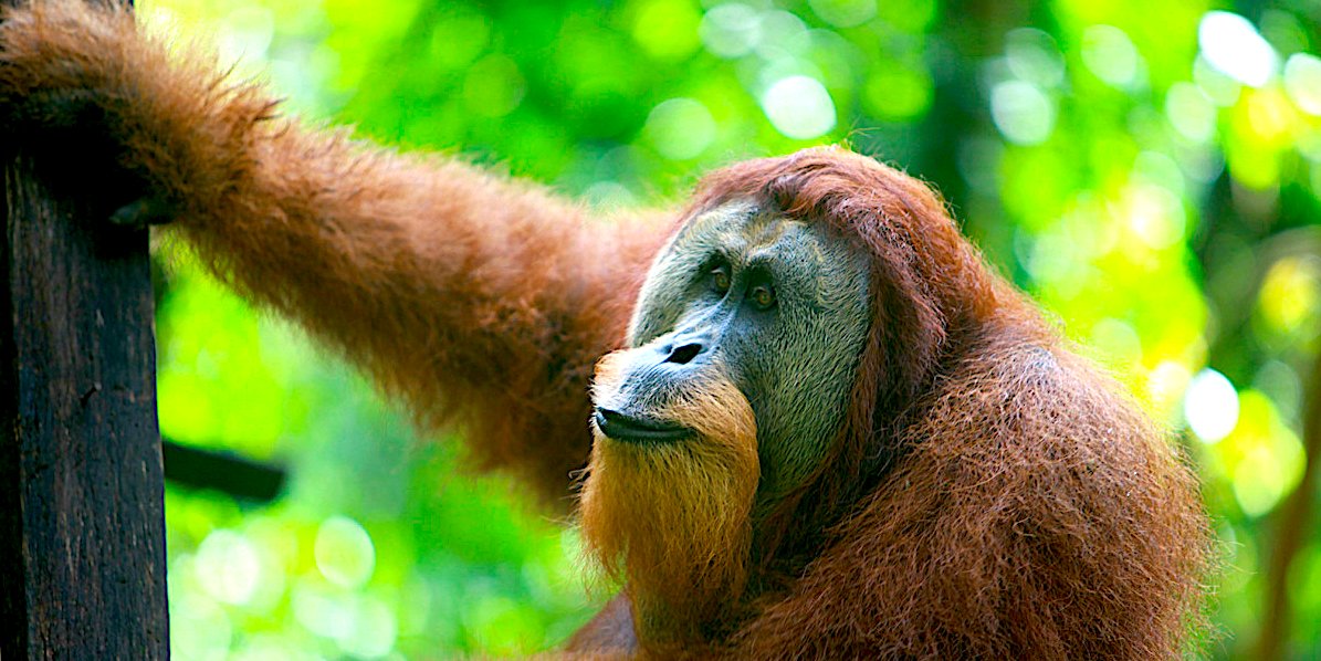 'Meaningless certification': Study makes the case against 'sustainable' palm oil