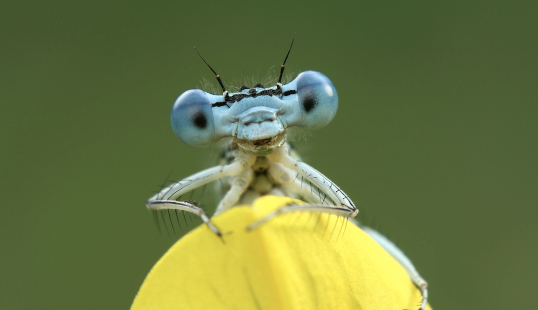 Disaster Interrupted How You Can Help Save The Insects