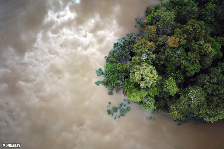 Flooded forest in the Amazon. Photo by Rhett A. Butler for Mongabay