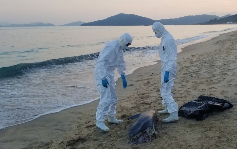 Officials conducting a necropsy of a dead finless porpoise in Hong Kong. Image by Gary Stokes / OceansAsia.