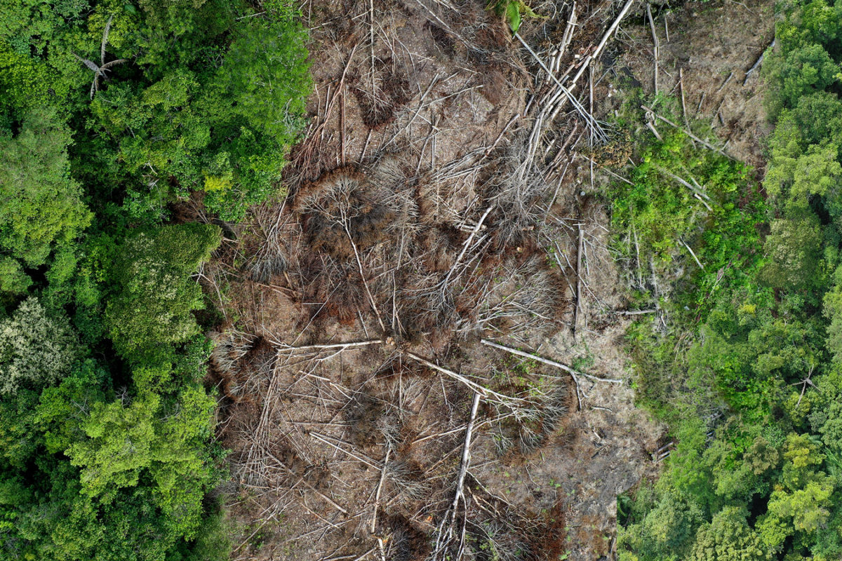 How much rainforest is being destroyed?