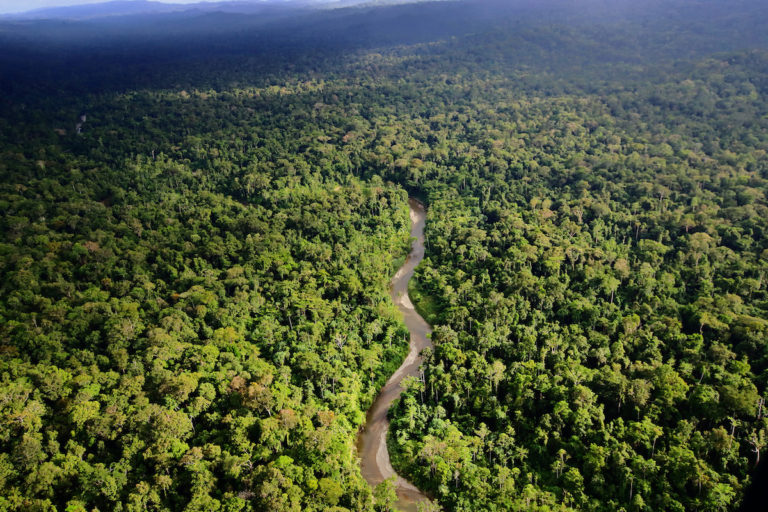 New Zealand developer denies key role in giant palm oil project in Indonesia