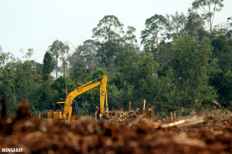 Excavator working an acacia plantation in Riau, the Indonesian province that lost 22% of its primary forest cover between 2002 and 2019. Photo by Rhett A. Butler.