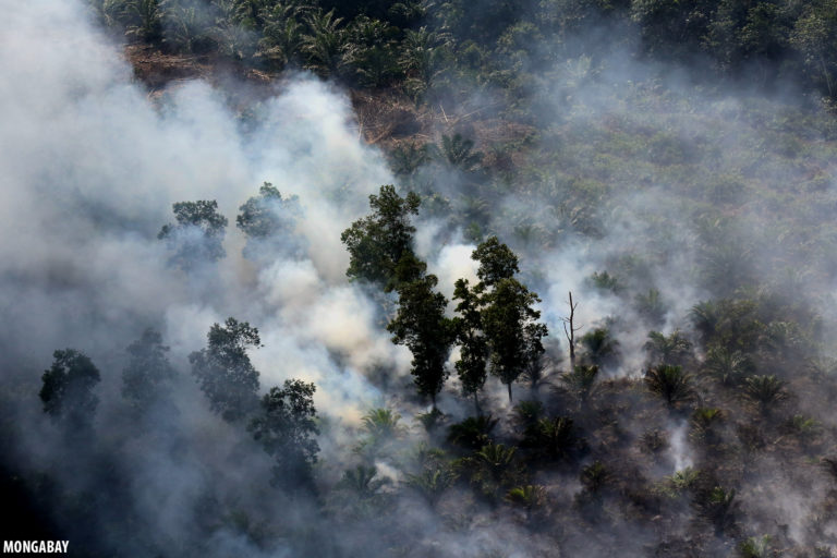 Fire burning through forest and oil palm on peatlands in Indonesia. Photo by Rhett A. Butler.