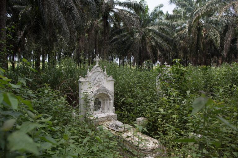 news.mongabay.com: How the legacy of colonialism built a palm oil empire