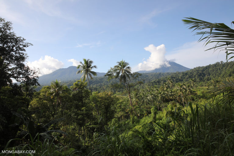Rainforest cleared for a coconut plantation Dua Saudara Mountain in North Sulawesi. Photo by Rhett A. Butler.