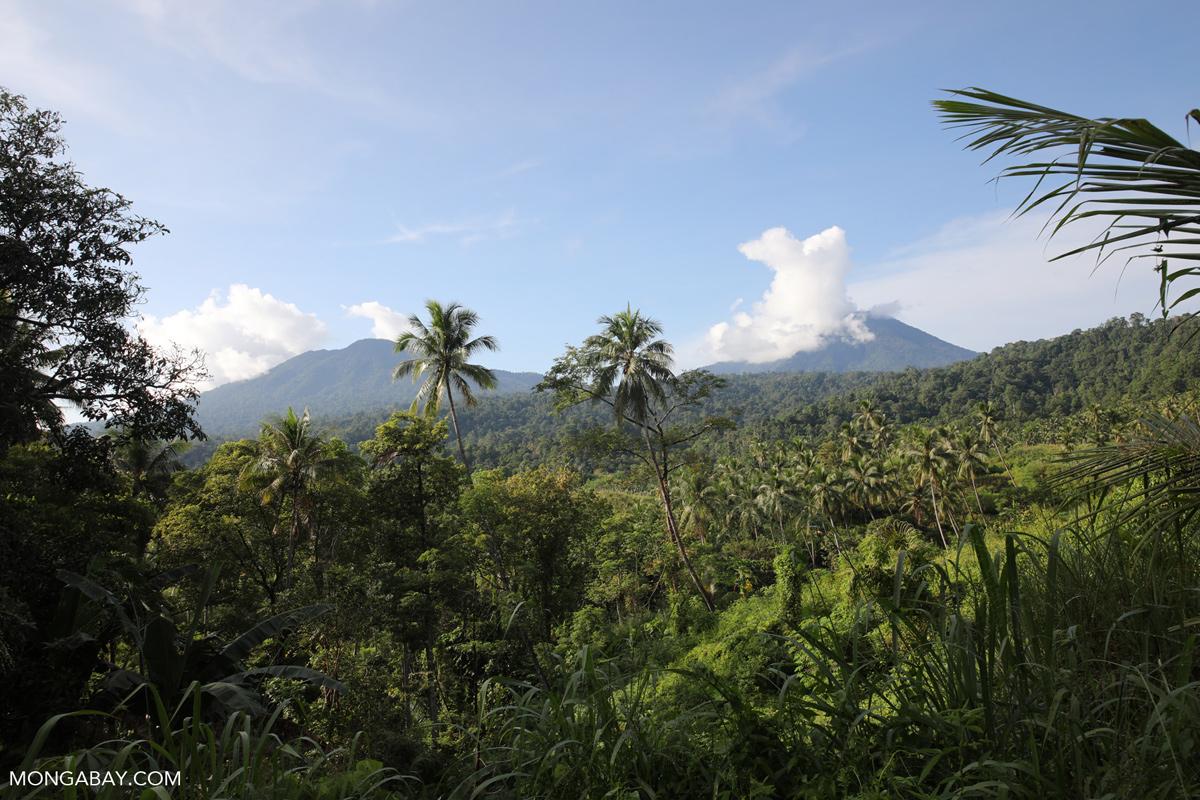 Rainforest cleared for a coconut plantation Dua Saudara Mountain in North Sulawesi. Photo by Rhett A. Butler.