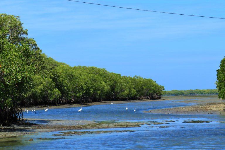 Sri Lanka Mangroves