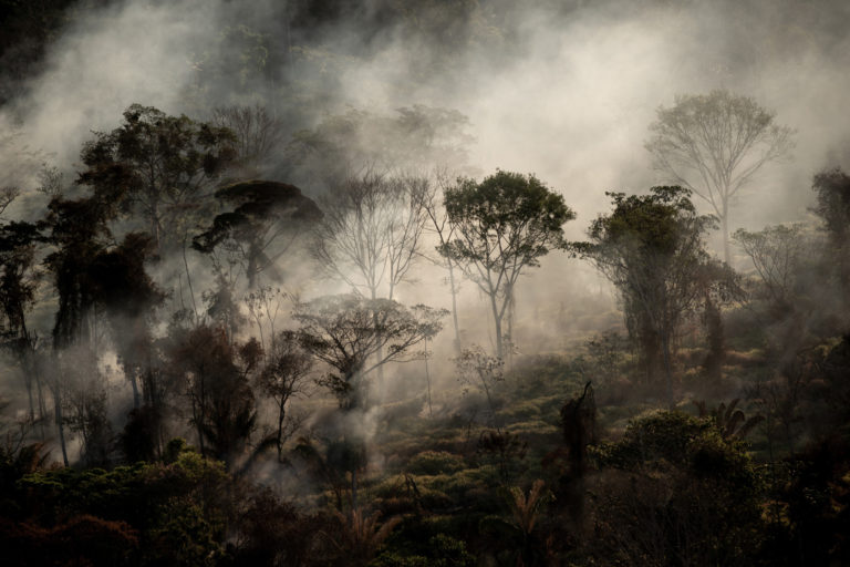 Hotspot directly in the forest, next to a freshly deforested area, with Deter warning, in Alta Floresta, Mato Grosso state. © Christian Braga / Greenpeace