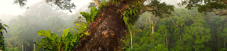 Rainforest canopy. Photo by E Ortiz.
