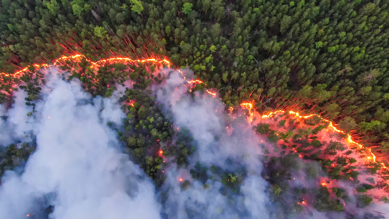 Krasnoyarsk, Siberia, is just one region where fires are burning throughout Russia in 2020. Image by Greenpeace International.