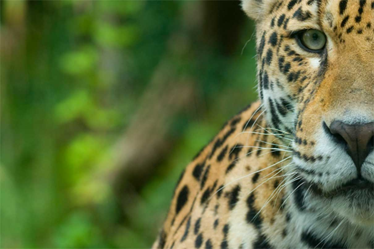 Brazilian Amazon drained of millions of wild animals by criminal networks: Report