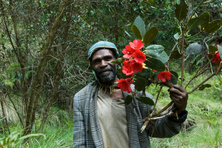 This local guide located a Rhododendron in bloom in the Cromwell Mountains of Papua New Guinea. Credit RBG Kew