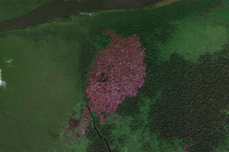 Microsoft Zoom Earth satellite image show a section of burned peatland in the region in Central Kalimantan where the rice project is planned.