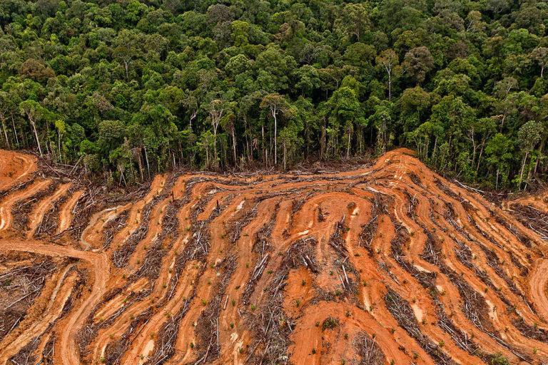 Deforestation for oil palm. Courtesy of Greenpeace.