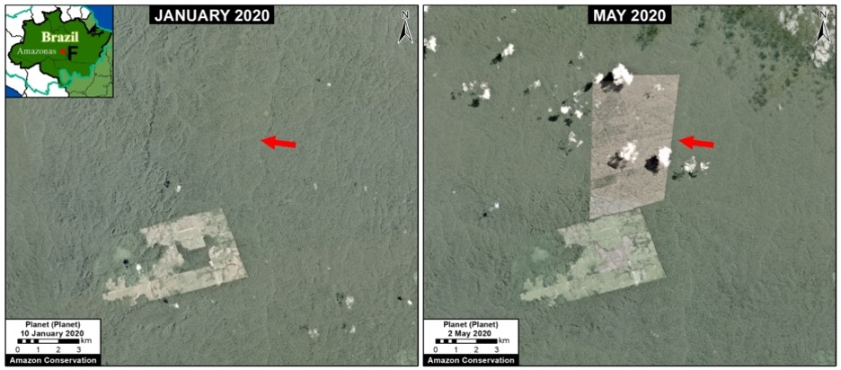 One of the areas predicted to burn this year (Zone F in map above) did indeed catch fire in late July. The image shows the deforestation of 2,395 hectares (5,920 acres) between January (left panel) and May 2020 (right panel), in Amazonas state Brazil, close to the Jamanxim National Forest. Image courtesy of MAAP.
