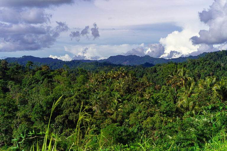 Mature forest and mountains as seen from the Lae-Madang Highway in Morobe province, Papua New Guinea. Image courtesy of Zacky Ezedin/University of Zurich.