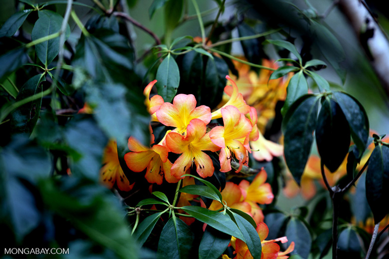 More than two-thirds of the plants identified in the study are endemic to New Guinea, meaning they're found nowhere else.