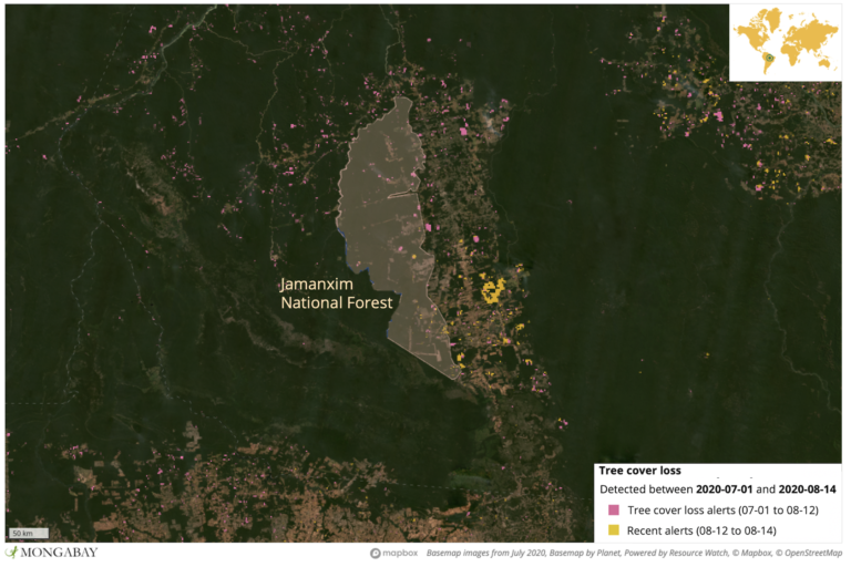 Satellite data from the University of Maryland show deforestation in and around Jamanxim National Forest. Fires have increased in this region in recent weeks.