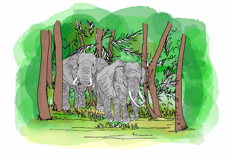 Keo Seima's southern border, which rubs shoulders with Vietnam, remains a haven for elephants. Illustration by Zoe Osborne.