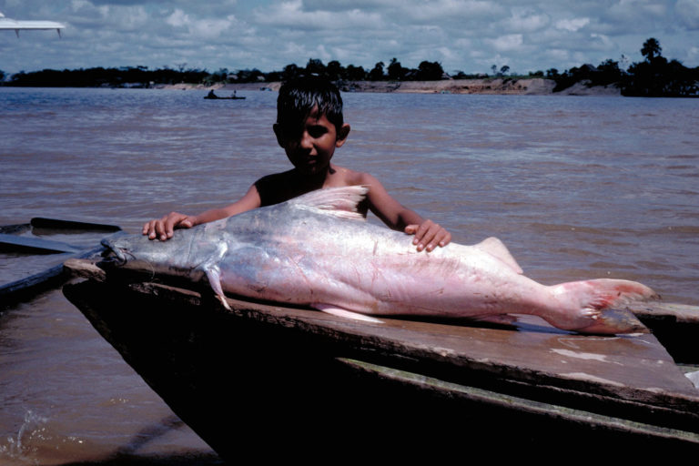 Boy with a 'dorado' catfish. Photo by Michael Goulding.