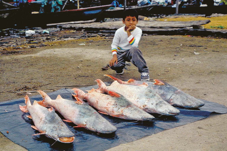 Dorado in a fish market in Pucallpa. Photo by Michael Goulding.