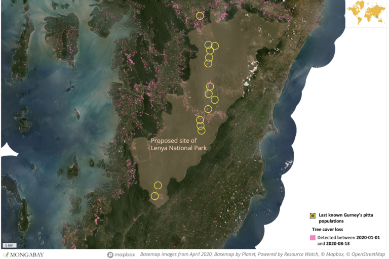Satellite data show deforestation has recently occurred in most of the last known remaining Gurney's pitta habitat sites in Tanintharyi. Data from the University of Maryland and N.M. Shwe et al., 2019.