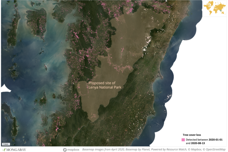 Satellite data from the University of Maryland show large areas of tree cover loss in and around the proposed Lenya National Park this year.