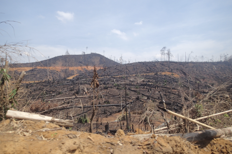 Forest clearing in the proposed Lenya National Park observed in 2016. Image by Dan Mulcahy.