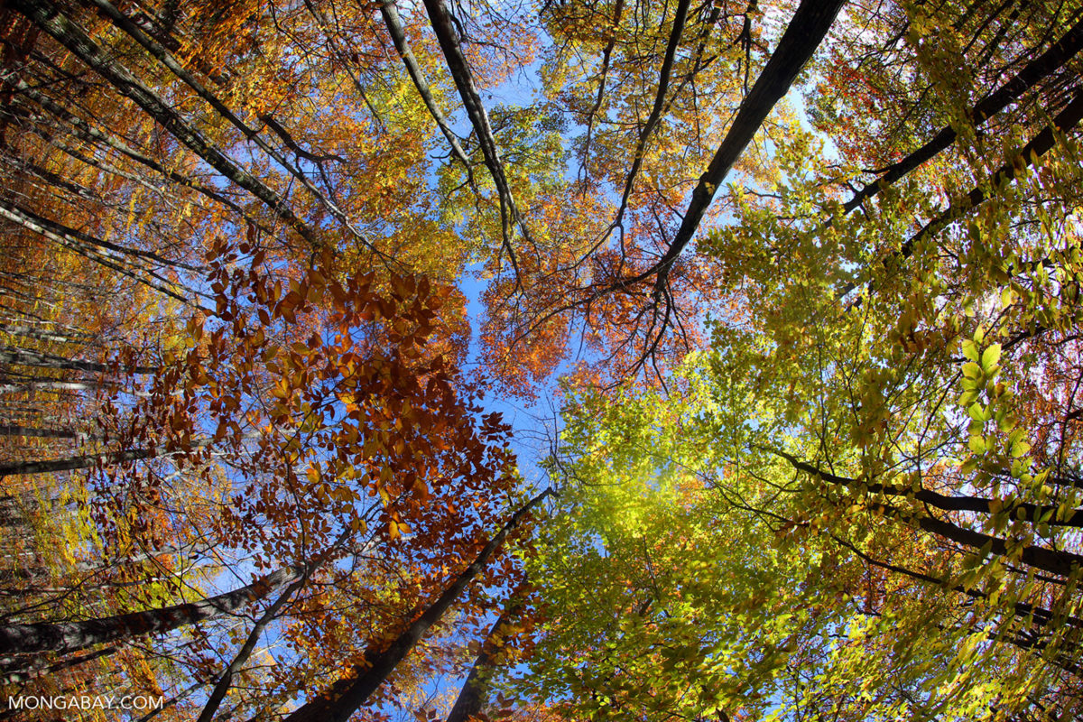 Pittsfield State Forest in Massachusetts. Photo by Rhett A. Butler.