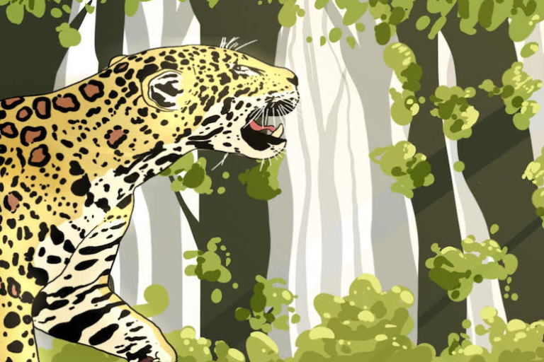 jaguar 768x512.