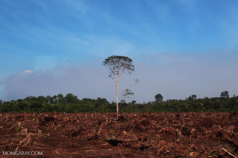 Forest cleared for palm oil production in Indonesia. Rhett C. Butler for Mongabay.